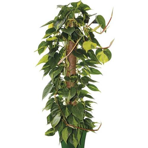 Musky stick for Plants